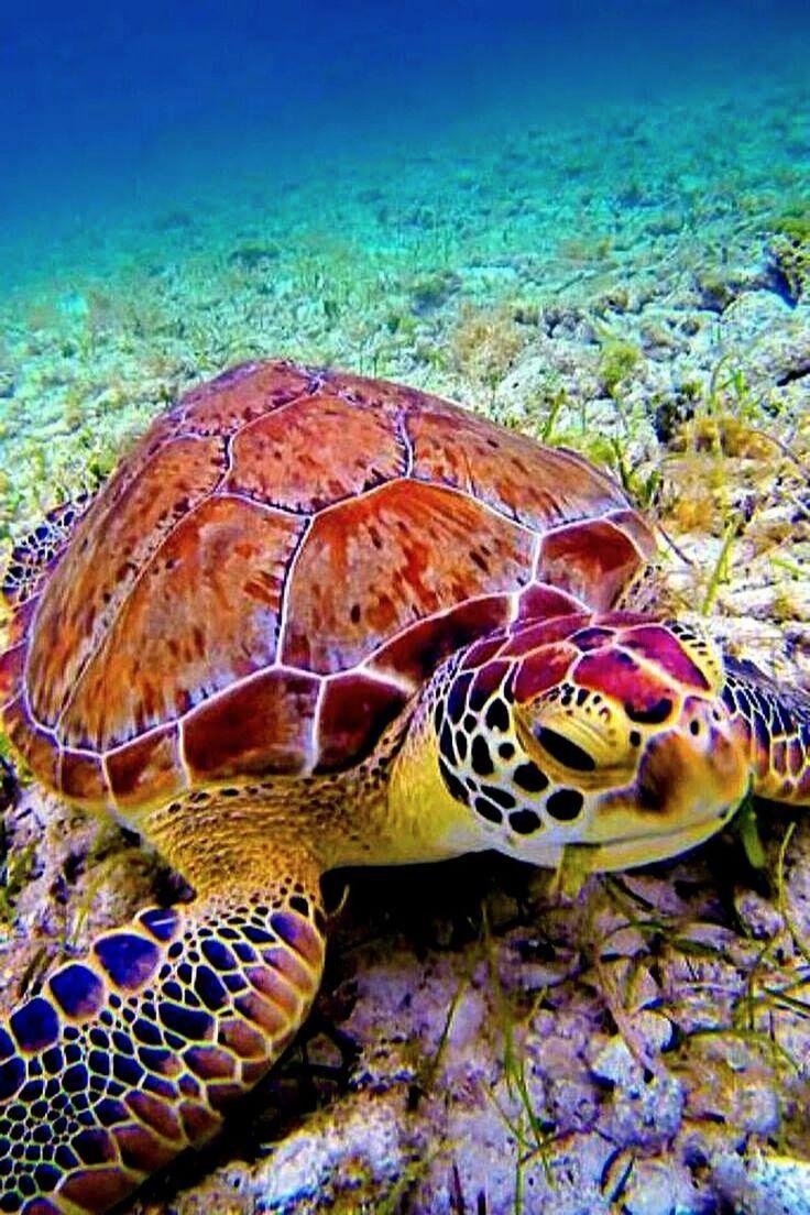 SEA TURTLES SAND Sea turtle wallpaper, Cute turtles