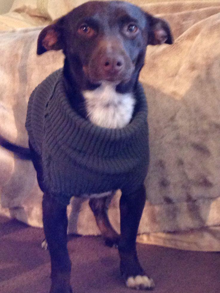 My new sweater !