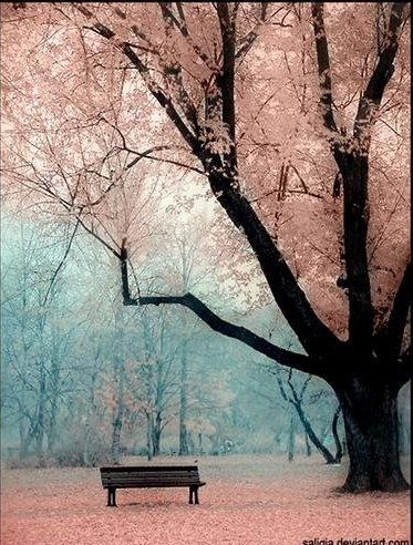 : Picture, Color, Beautiful, Trees, Place, Photo