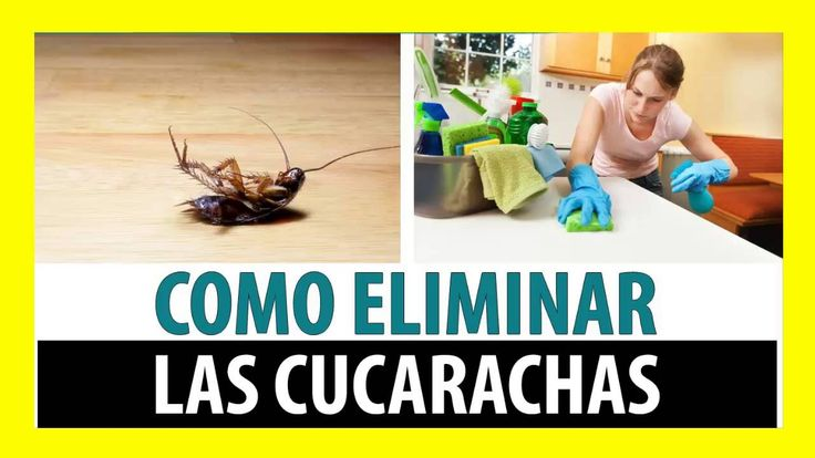 Como Eliminar Las Cucarachas Para Siempre De Mi Casa
