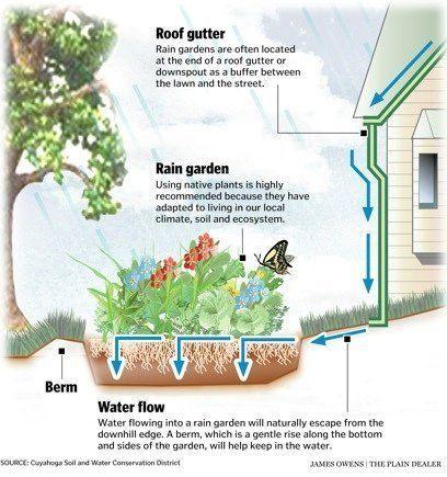 Best 25 Rain Garden Ideas On Pinterest Rock Garden