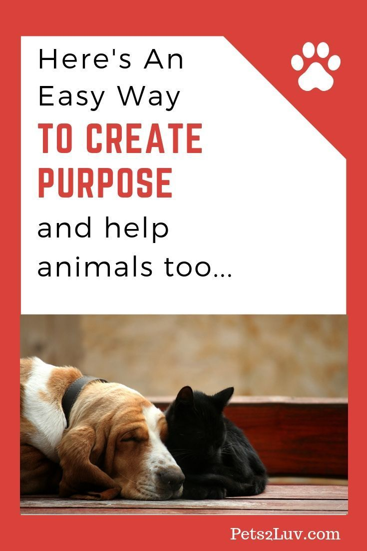Here S An Easy Way To Create Purpose And Help Animals Too Animals Losing A Pet Animal Shelter