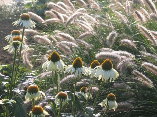 654 best planting combinations images on pinterest for Planting schemes with grasses