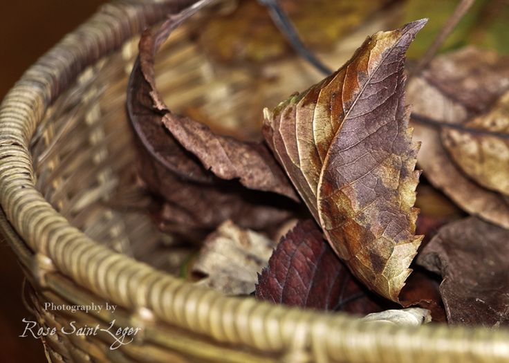 Lady Autumn : the palette of dead leaves and how they change colours