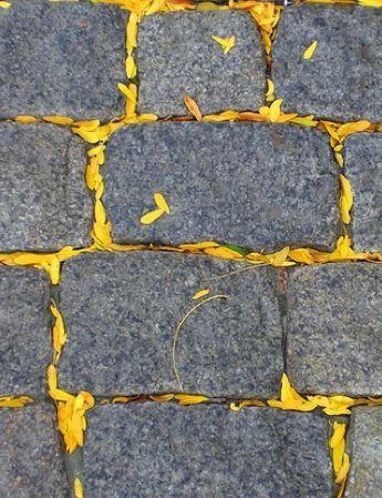 yellow and grey *•. ❁.•*❥●♆● ❁ ڿڰۣ❁ ஜℓvஜ♡❃∘✤ ॐ♥..⭐..▾๑ ♡༺✿ ♡·✳︎· ❀‿ ❀♥❃.~*~. SUN…