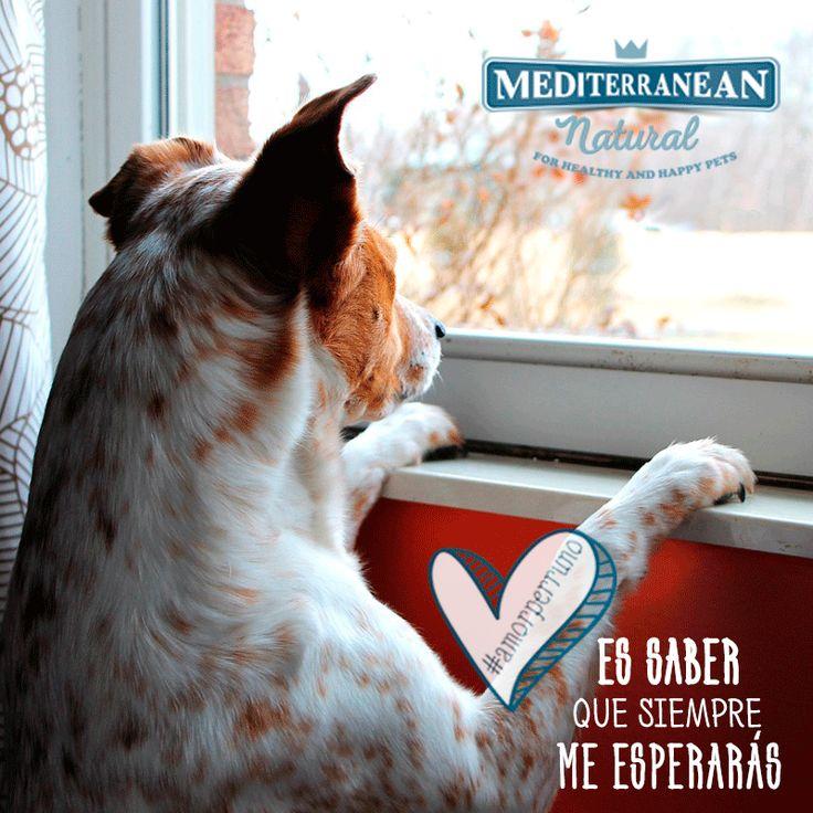 Amor perruno es saber que siempre me estarás esperando 💙 Dog love is to know that you will always wait for me / Mediterranean Natural / perros / dogs / citas