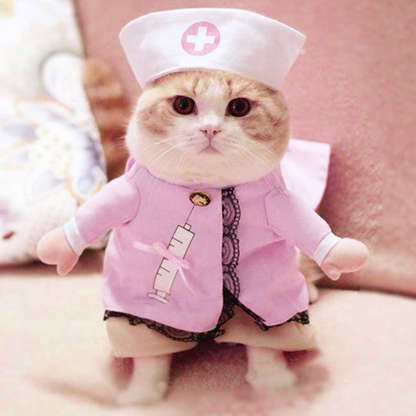 Wholesale Pet Cat Dog Nurse Costume Cosplay Change Clothes S Pink Online. Cheap Petite Jackets And Petite Dress on Rosewholesale.com