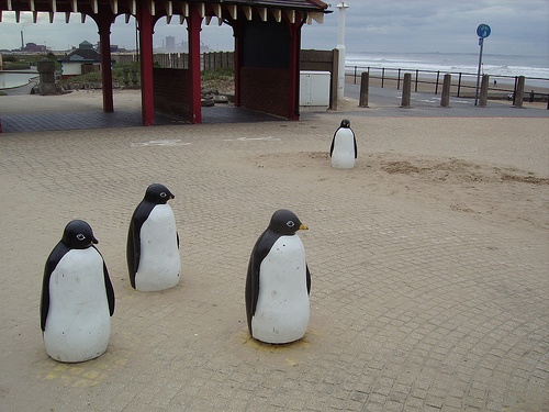 Redcar penguins