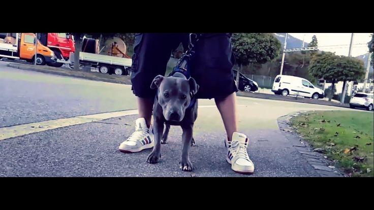 Lazy x Knozah B - Az ember legjobb barátja | Official Music Video 2016 | http://newvideohiphoprap.blogspot.ca/2016/10/lazy-x-knozah-b-az-ember-legjobb-baratja.html