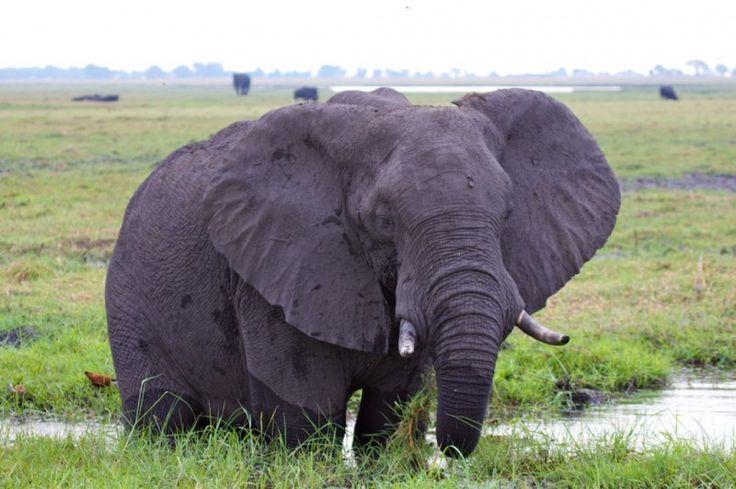 Africa Overland Tours: Victoria Falls to Cape Town photo safari