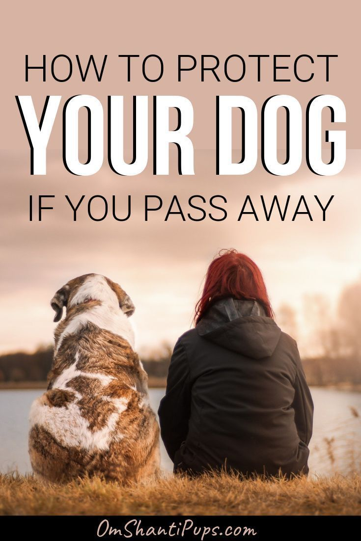 How To Protect Your Dog If You Pass Away In 2020 Pet Trust Pet Care Printables Pets