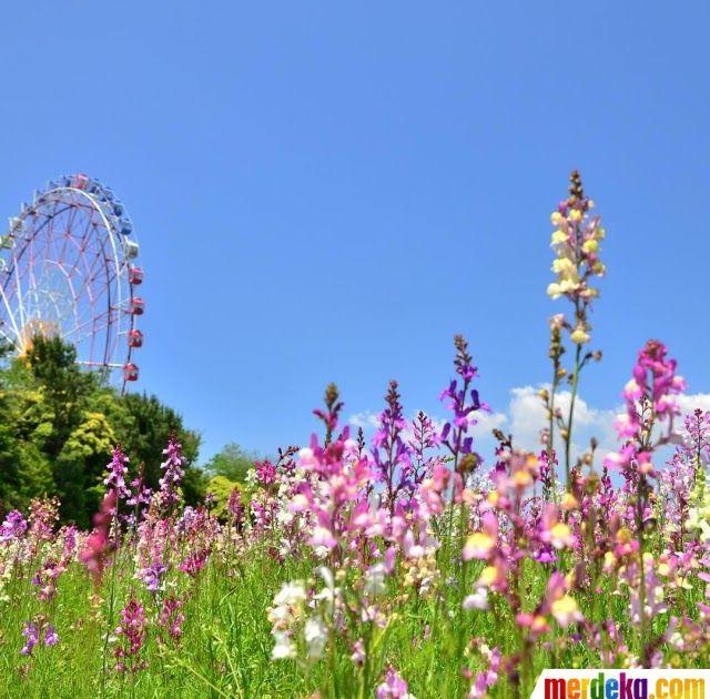 16 Foto Pemandangan Yang Cantik Foto Potret 10 Wajah Hitachi Seaside Park Yang Tampilkan Download Cara Menggambar Dan Gr Pemandangan Latar Belakang Gambar