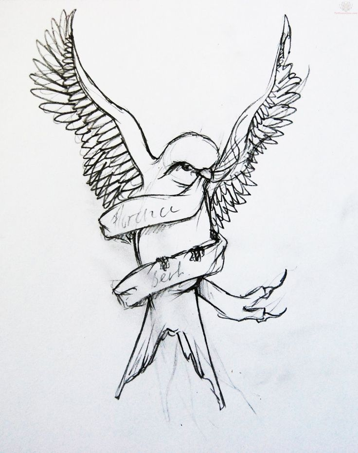 Swallow Tattoo Line Drawing : Best swallow bird tattoo drawing designs images on