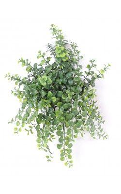 Les 24 meilleures images propos de plantes retombantes for Kajuard plantes