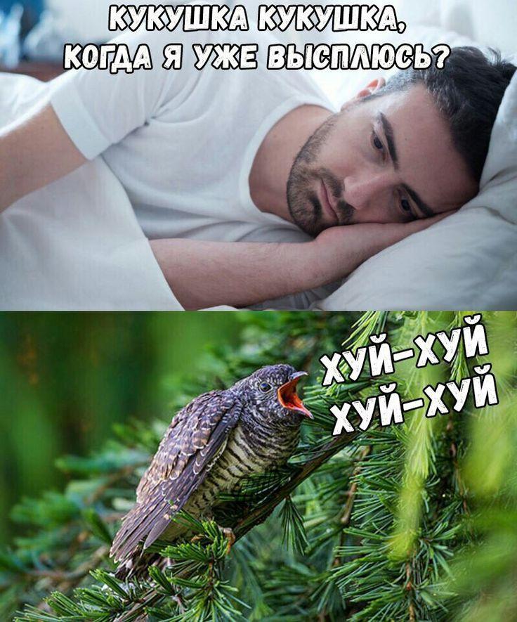 Смешные картинки про кукушек