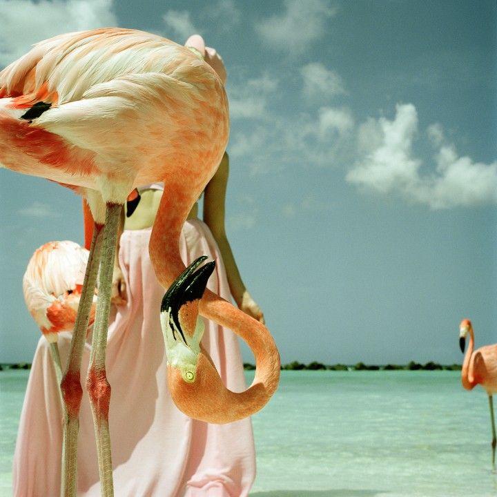 """Sensibles et poétiques, les clichés d'Annelie Vandendael témoignent d'une possible cohabitation entre l'humain et la nature. Retrouvez son portfolio sur le site de #fisheyelemag ! [Photo: Extrait de """"Sois belle"""", © Annelie Vandendael] #photo #photographie #photography #soisbelle #annelievandendael #beach #plage #summer #flamantrose #flamantsroses #flamingo #flamingos #pinkflamingo #pinkflamingos"""