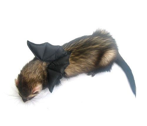 Ferret Bat Wings Ferret Pinterest Halloween
