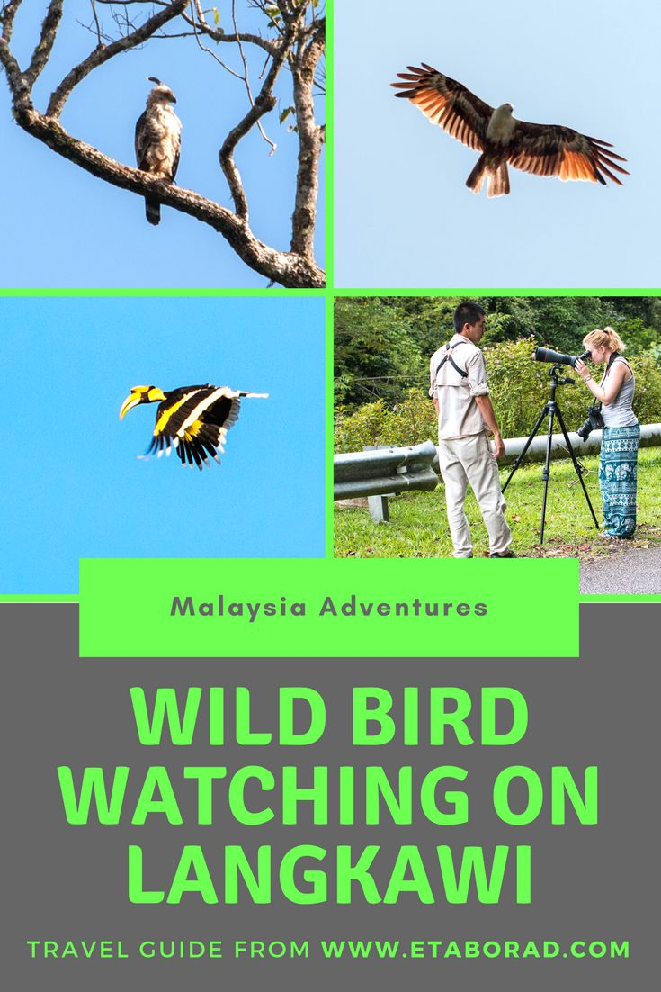 Amazing adventure on Langkawi in Malaysia - Wild Bird watching. Langkawi is island on birds, so if you are lucky you can see hundreds of different species of birds.