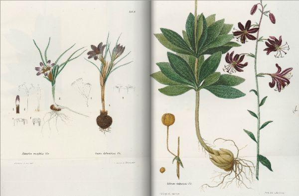 Djelo Flora Dalmatica, sive enumeratio stirpium vascularium quas hactenus in Dalmatia lectas et sibi observatas, descripsit, digessit, rarioumque iconibus illustravit Robertus de Visiani, vrijedan je doprinos botanici biologa i pjesnika Roberta de Visianija. Bogato dokumentirano i ilustrirano djelo najopsežnija je monografija o našoj flori. U njoj je Visiani obradio 2250 biljnih vrsta i nižih taksonomskih jedinica Dalmacije, a prvi je put opisao 60 novih vrsta i pet novih rodova biljaka.