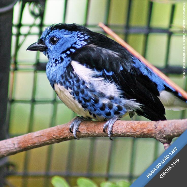 000 imagens sobre natureza no Pinterest  Árvores, Raposas e Rios