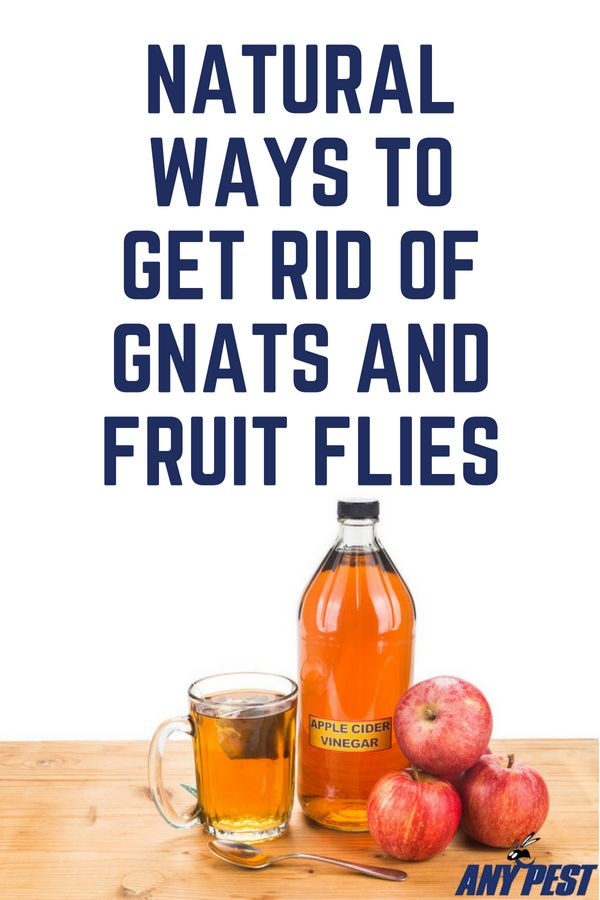 How to Combat and Prevent Gnats and Fruit Flies | How to ...