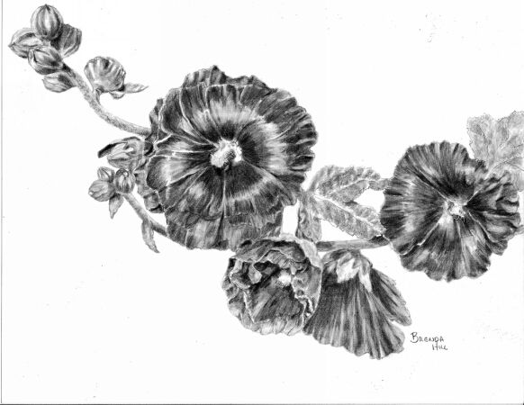 Rejoicing graphite floral by Brenda Hill