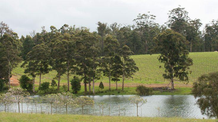 Vineyard beside a dam in the Manjimup wine region