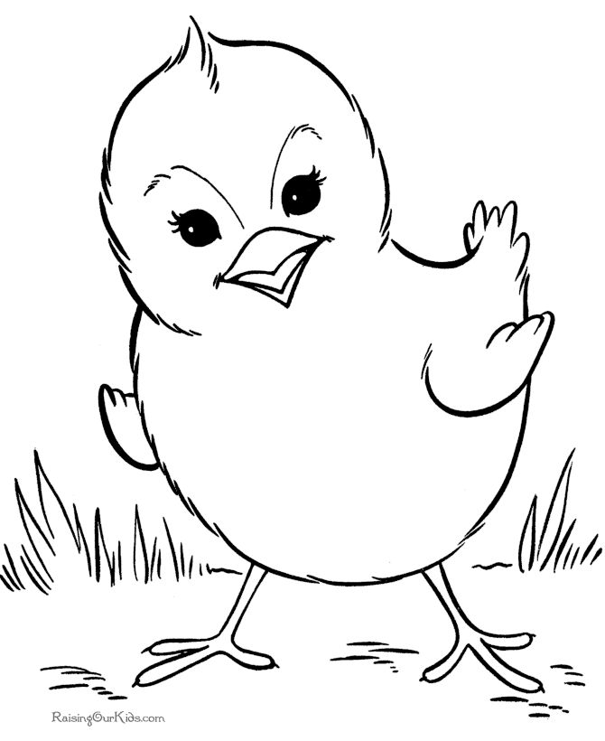 farm animal coloring page free printable chicken coloring pages featuring hundreds spring baby chick coloring page sheets