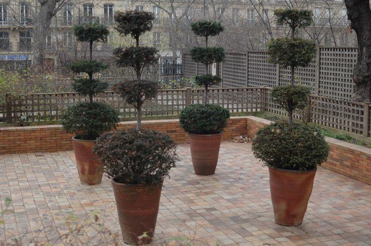Jardin medieval du musee de Cluny 3