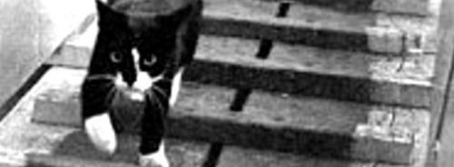 Unsinkable Sam - The Cat Which Survived Three Sunken Ships in...