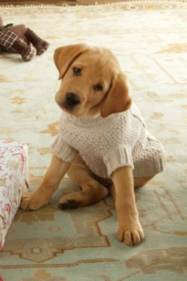 Cable Knit Dog Sweater from Soft Surroundings