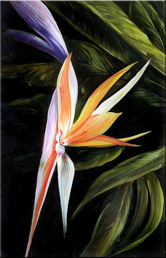 ORIGINAL Oil Painting Exotic 23 x 36 Flowers by ArtPaintingsMP