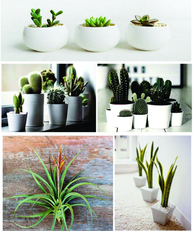 Some easy care for indoor houseplants. houseplants have many benefits wherever placed, not least in the house.