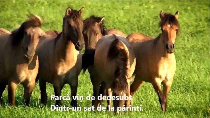 CAII LIBERI -  Victor SOCACIU - HD 1080
