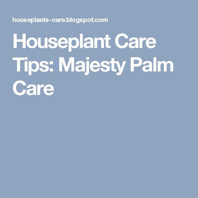 Houseplant Care Tips: Majesty Palm Care