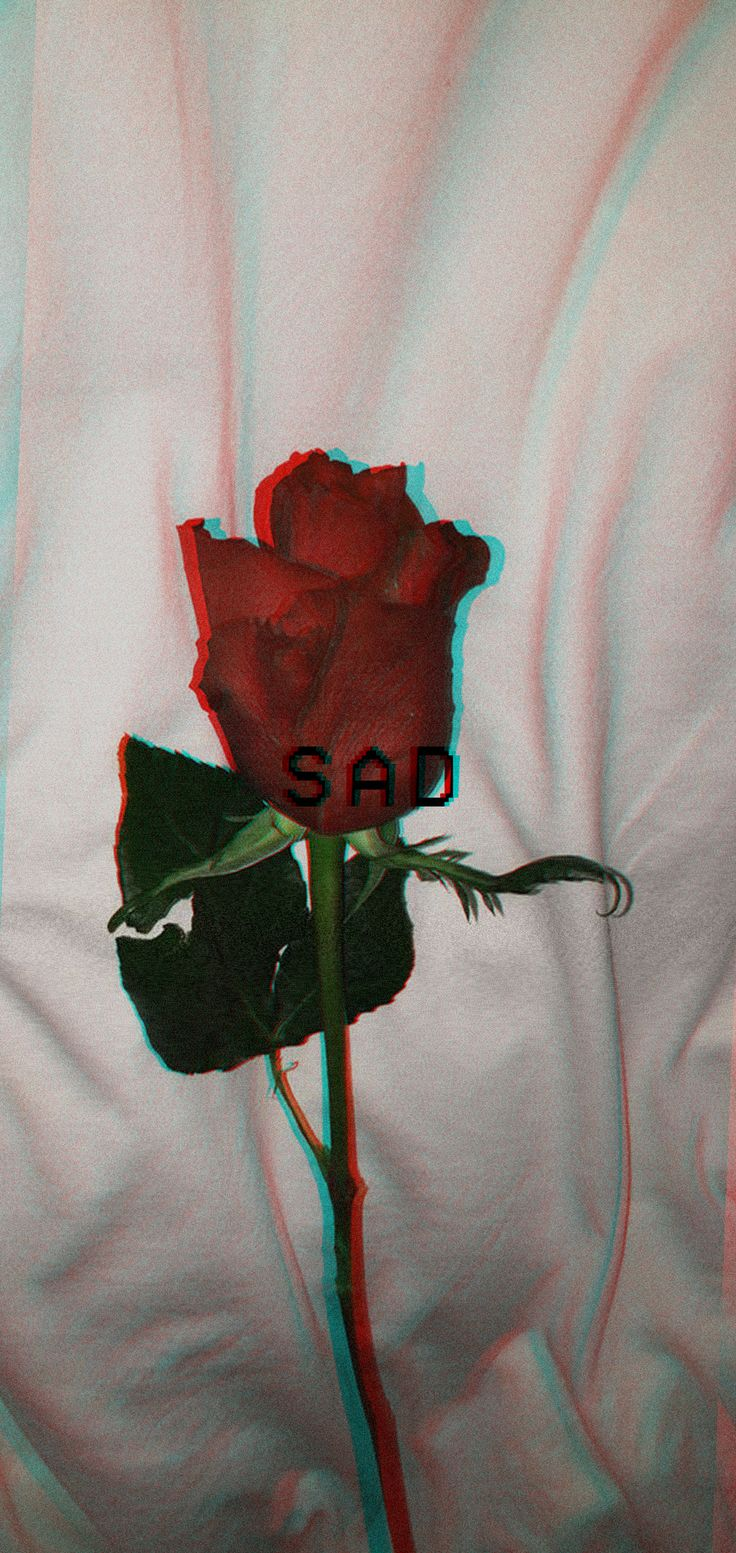 SAD Wallpaper Roses Rose 1080×2280