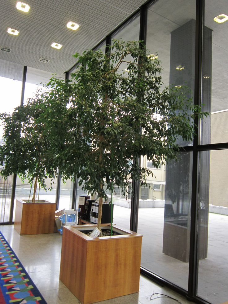 We can supply plants for your business or office premises