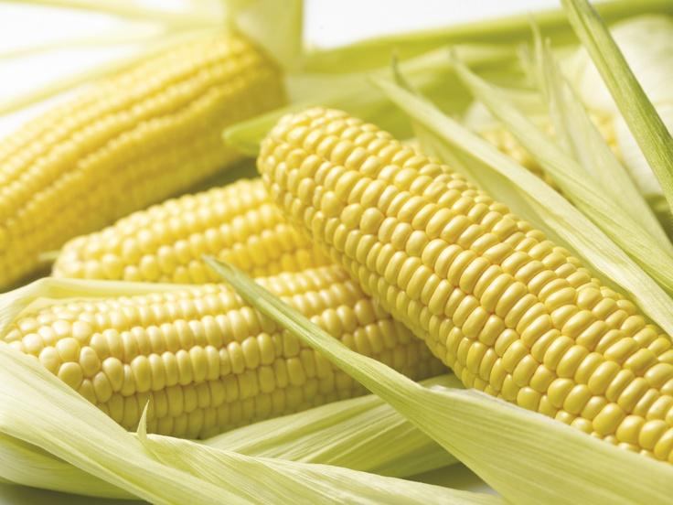 Kukorica cső