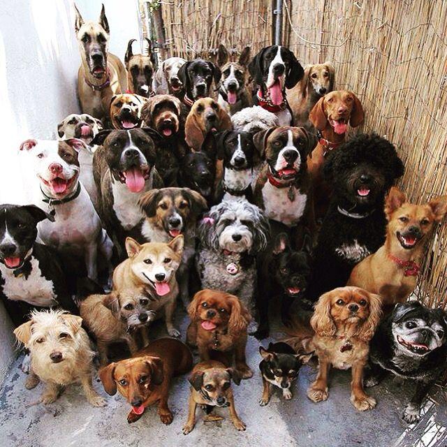 Squad goals #dogs