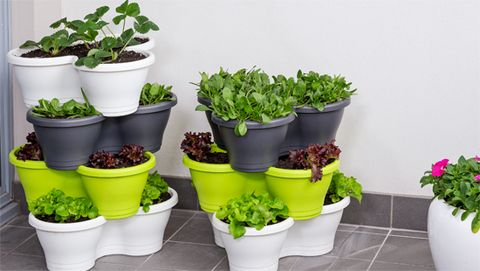 These stylish pots are designed to stack on top of each other, making the most of space so you can grow more small fruits, vegies and herbs.