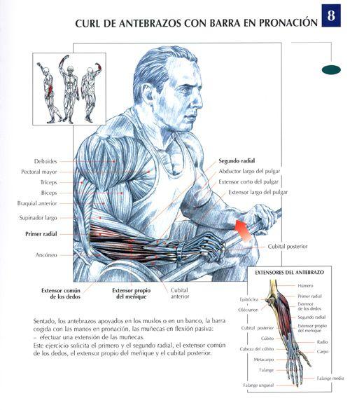 ejercicios de antebrazo con mancuernas - Buscar con Google