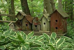 Row of charming birdhouses...: Birdhouses Feeders, Idea, Birds Birdhouses, Bird Feeders, Outdoor, Bird Houses, Garden