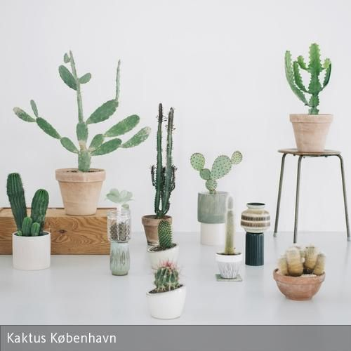 Kakteen und Sukkulenten – toller Concept Store in Kopenhagen: Kaktus København! #urbanjungle