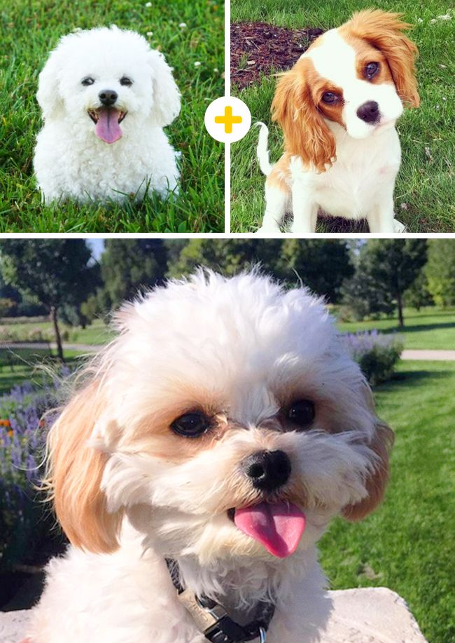 15indescribably cute dog breeds you'll want tocuddle