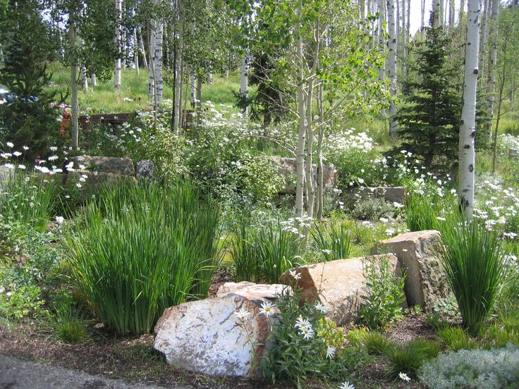 17 best images about curb appeal on pinterest garden for Xeriscape garden designs