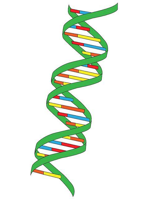 La struttura del DNA, scoperta il 28 febbraio 1953