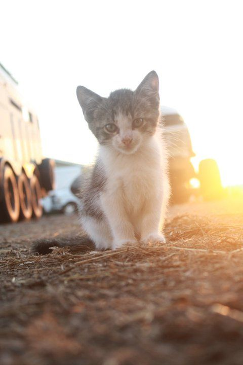 Junk Yard Kitty