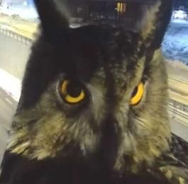 Finnish Traffic Camera Owl Don't Give A Hoot...see more at PetsLady.com -The FUN site for Animal Lovers