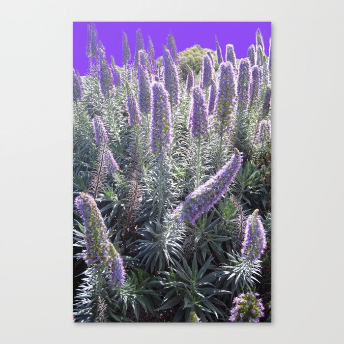 "Fine art print on bright white, fine poly-cotton blend, matte canvas using latest generation Epson archival inks. Individually trimmed and hand stretched museum wrap over 1-1/2"" deep wood stretcher bars. Includes wall hanging hardware."