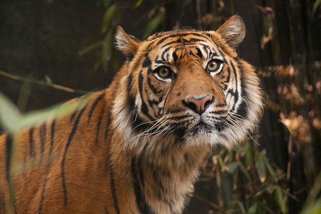 Taronga Zoo to Chowder Bay Walk